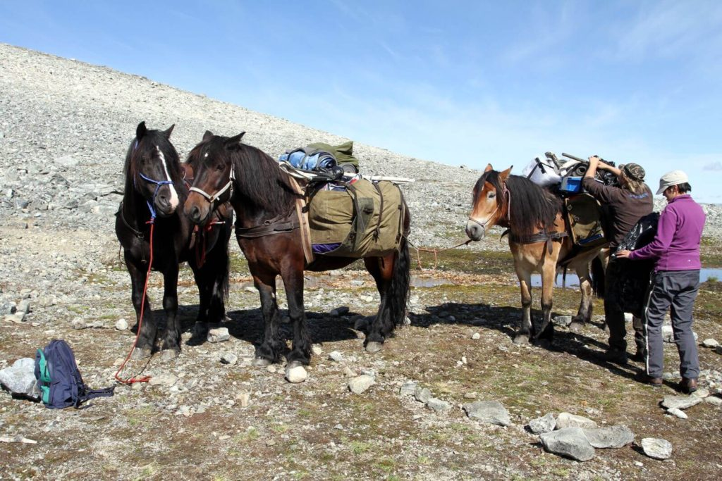 Jakop Brennhaug's packhorses
