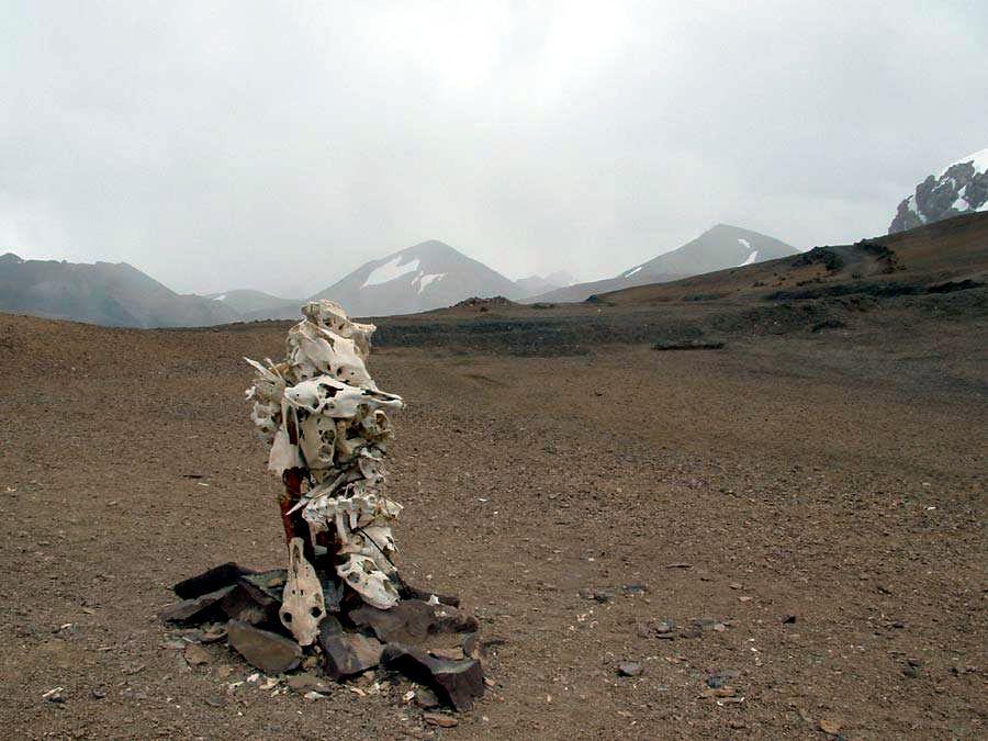 Skulls from pack animals in the Karakorum pass at 5500 m.